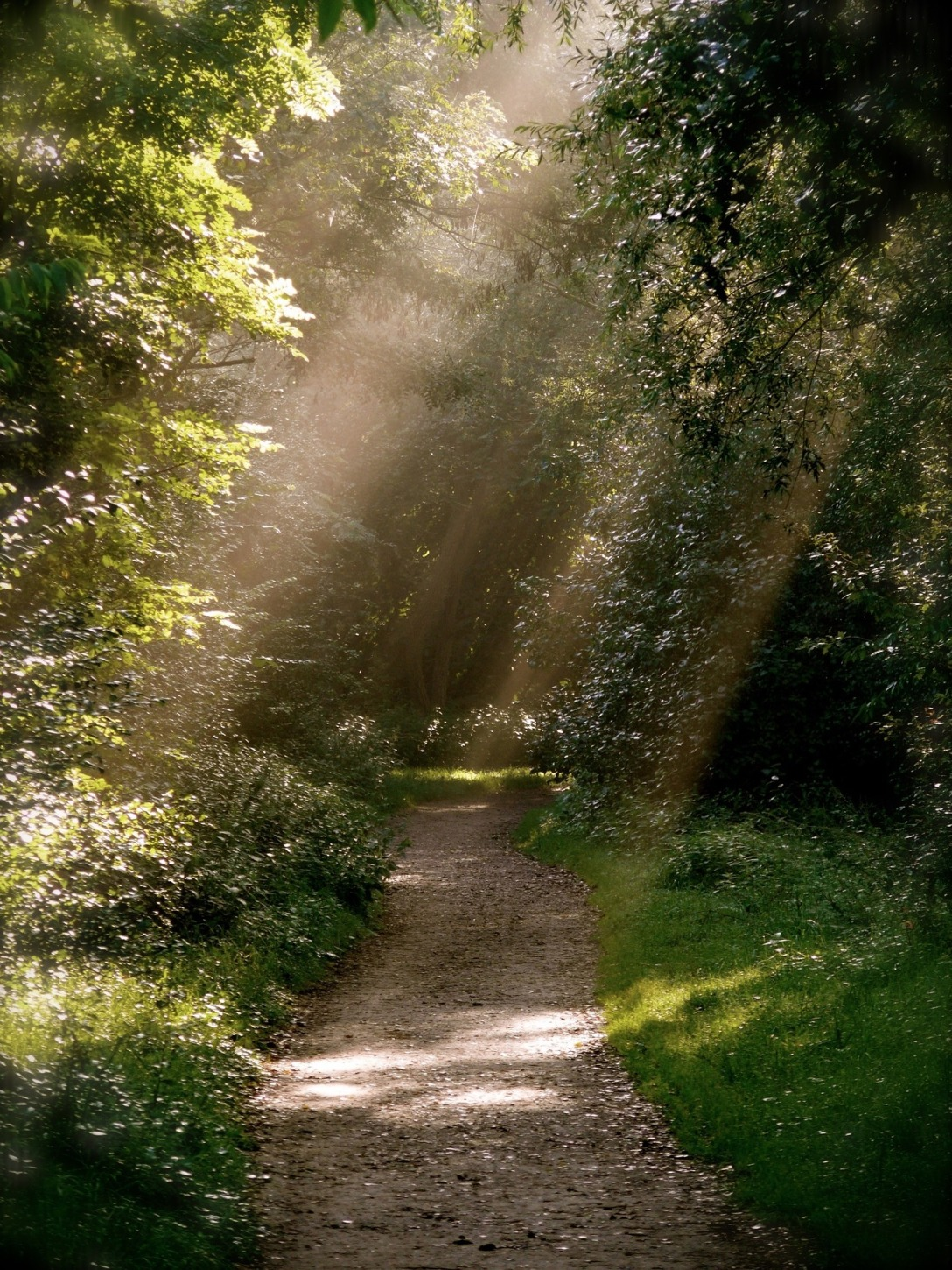 forest-path-979292_1920